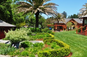 Landscaping Services in Sonoma County
