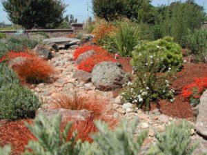Landscape Designer in Sonoma County